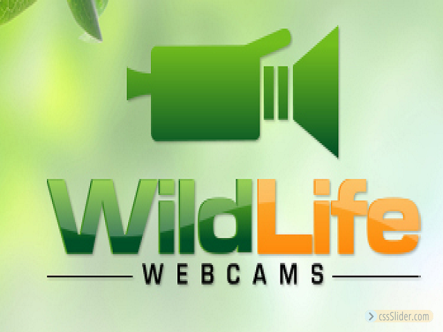 Wildlife Webcams