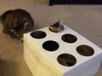 Whack-a-mole cat