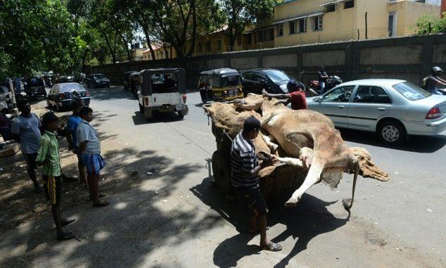 Gujarat dead cows